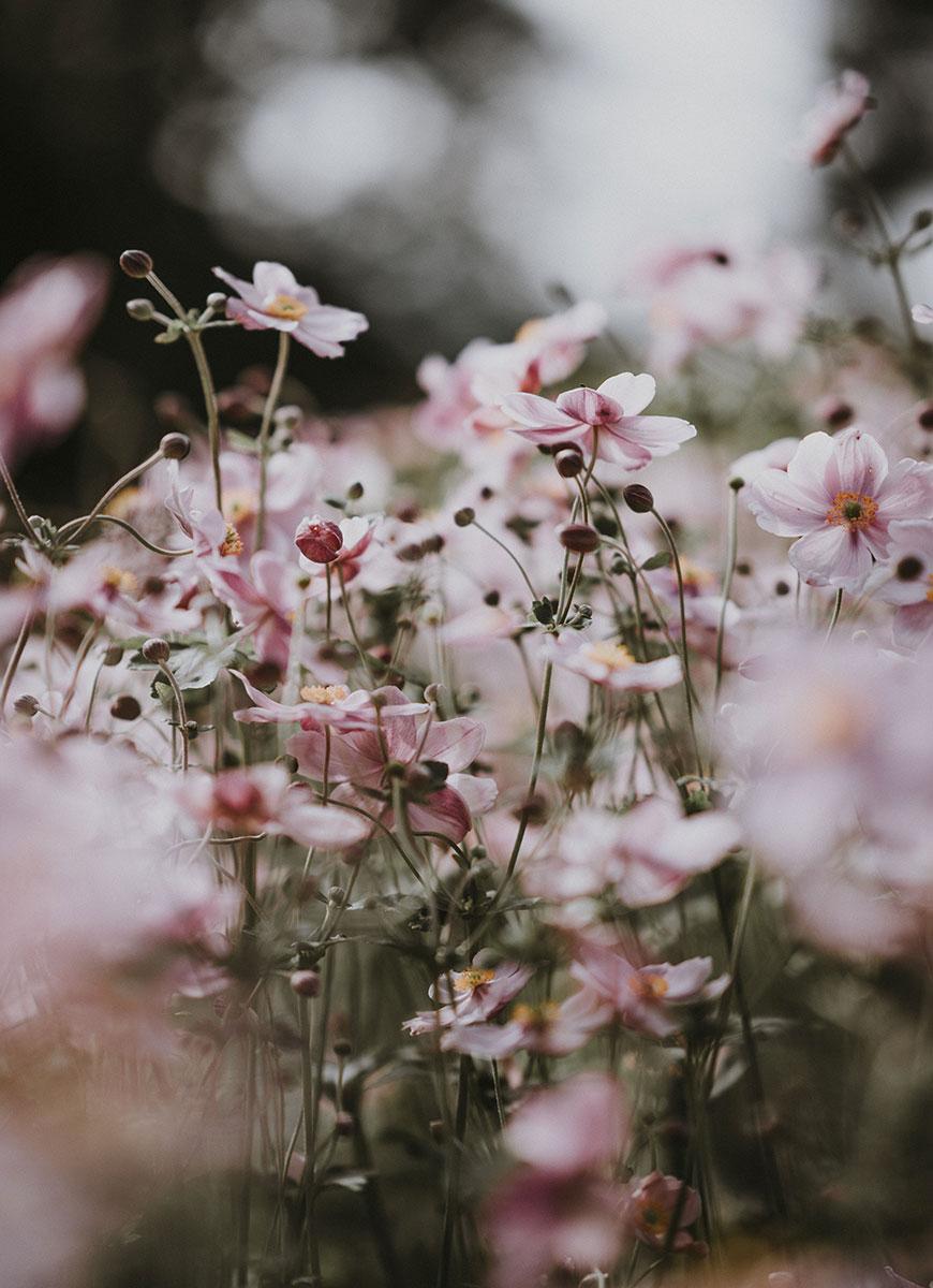 profumazione ambiente floreale