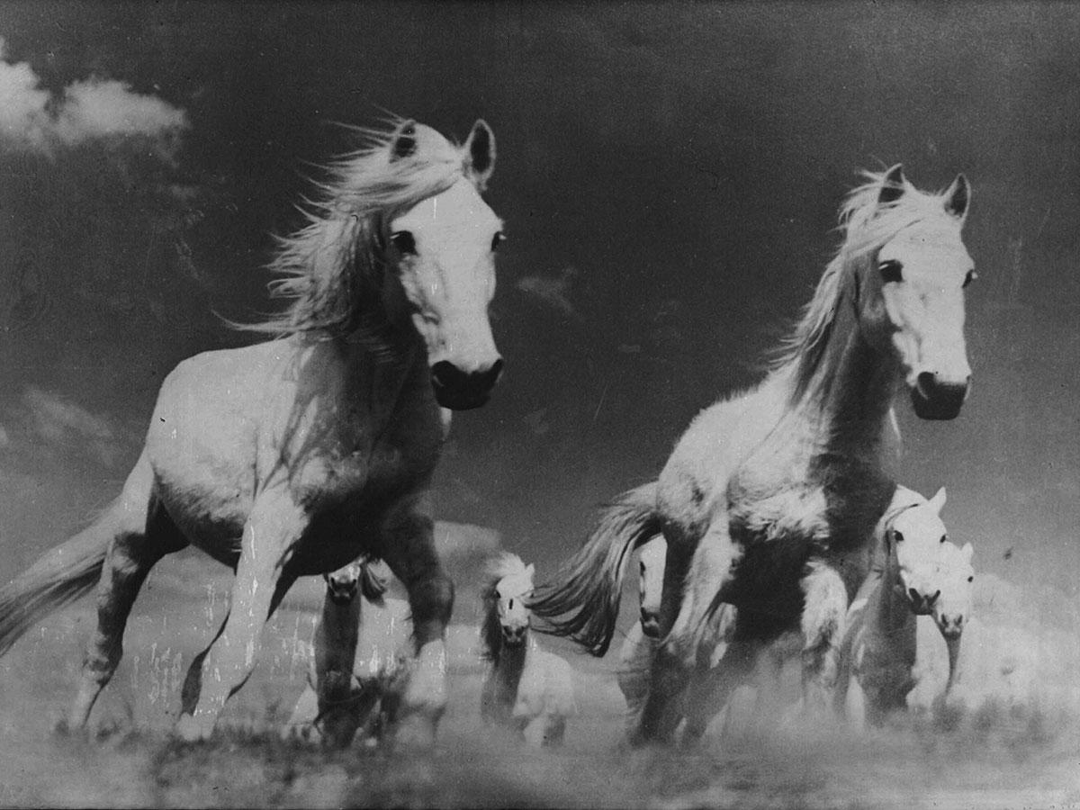 Cavallo bianco Pino Silvestre Vidal profumo